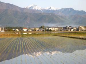 田植えの済んだ水面に映る常念岳